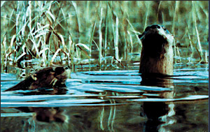 One way or the otter.
